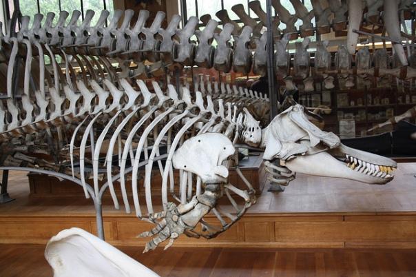 Au Museum d'histoire naturelle, Paris