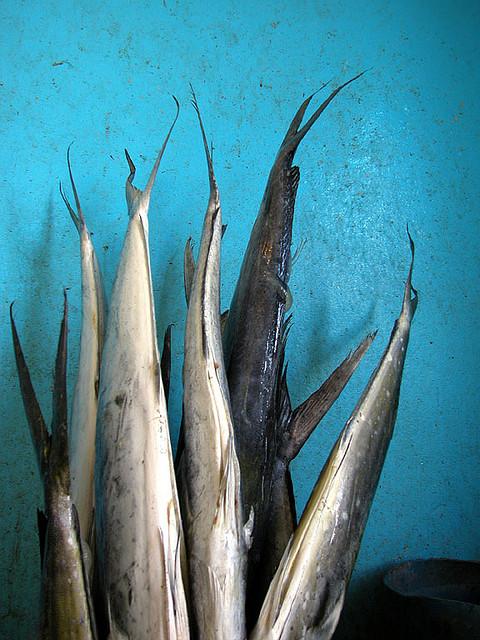 Pesce, par Maurizio Neri sur Flickr
